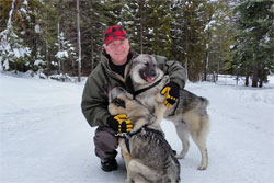 Leif, Male Norwegian Elkhound