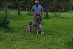 Kai Female Elkhound with Shorty