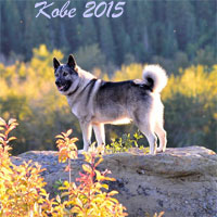 Kobe Elkhound Male